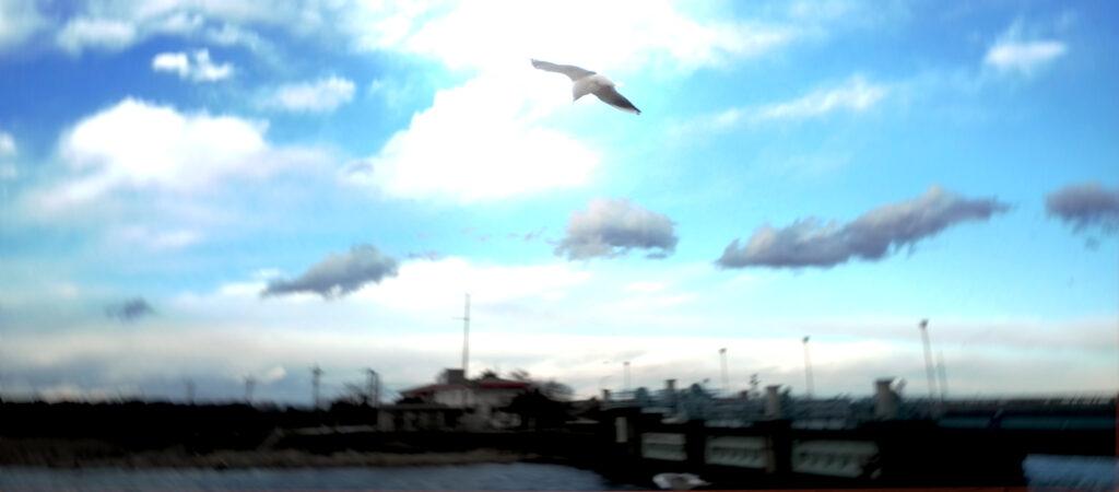 Sky and Bird.
